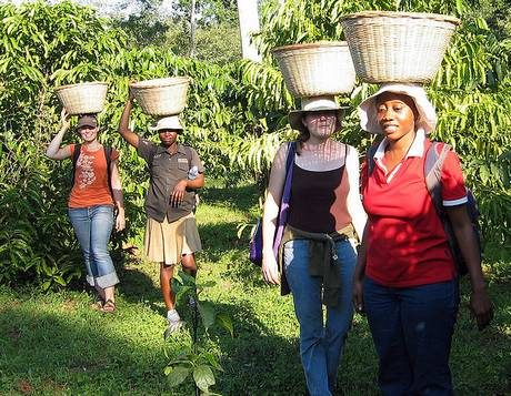 Coffee Harvest Baskets
